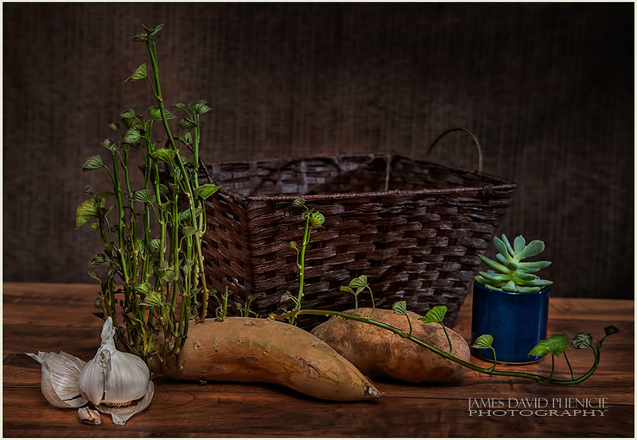 Sprouting Yam