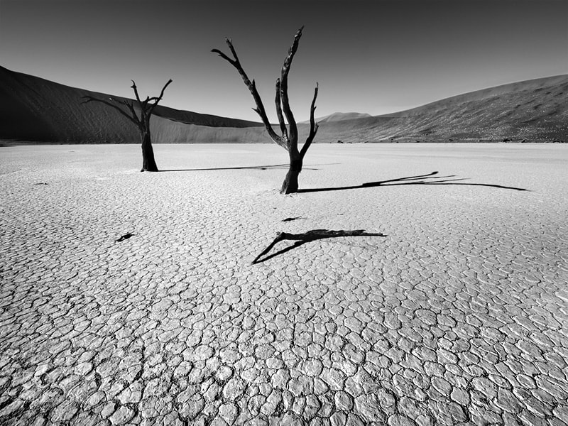Photograph Dead:Vlei by Nina Papiorek on 500px
