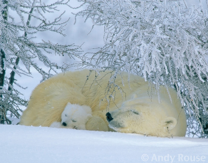 Photograph Silent Slumbers by Andy Rouse on 500px
