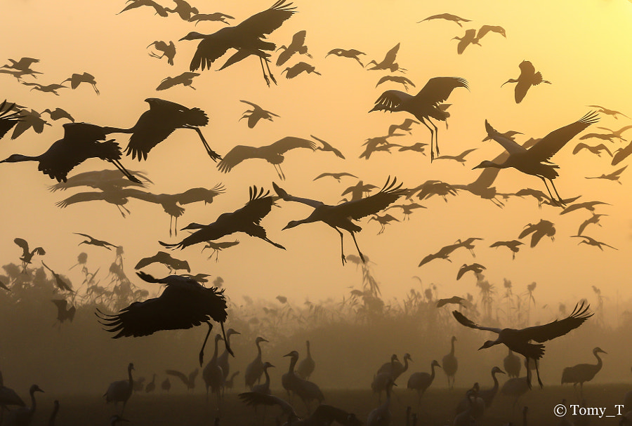 Photograph Sunrise silhouettes by Tomy Tetro on 500px
