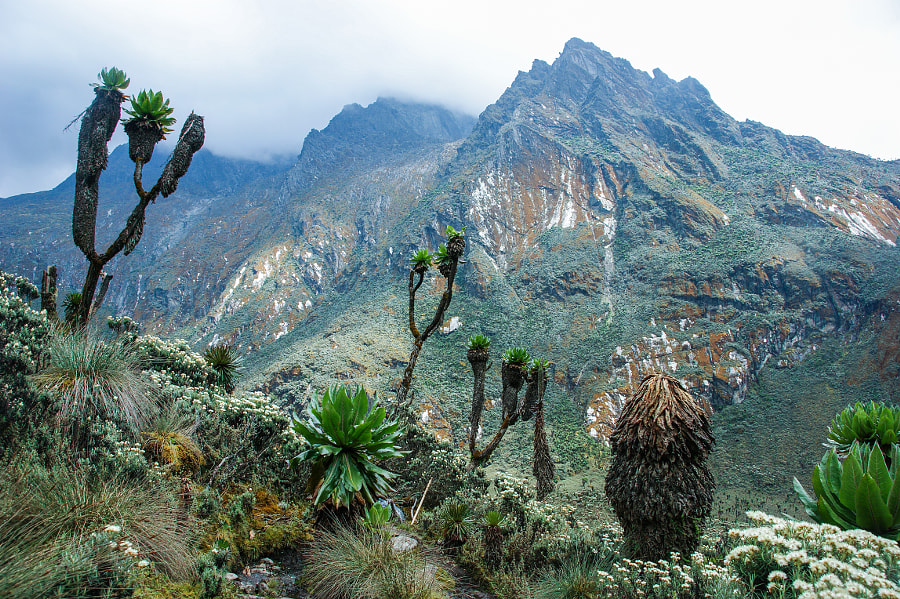 Rwenzori by Jørn Eriksson on 500px.com