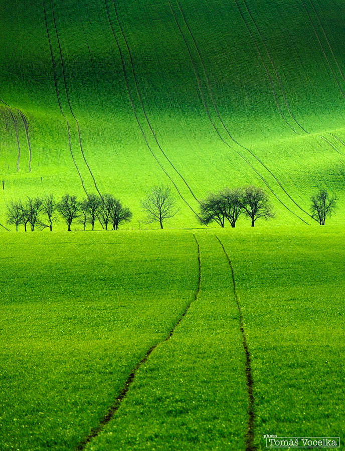 Photograph Green lines by Tomáš Vocelka on 500px