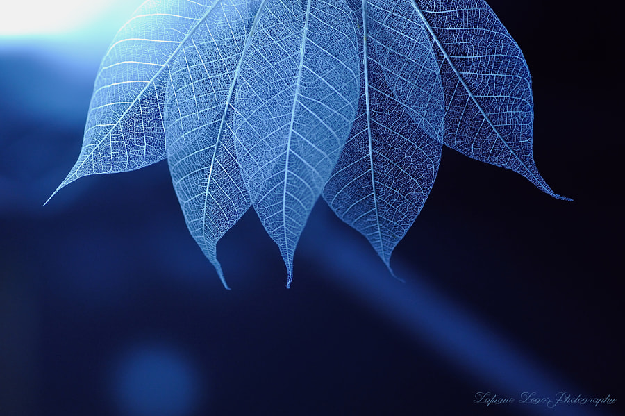 Photograph Blue Syndrome~Voices of Silence by Lafugue Logos   on 500px