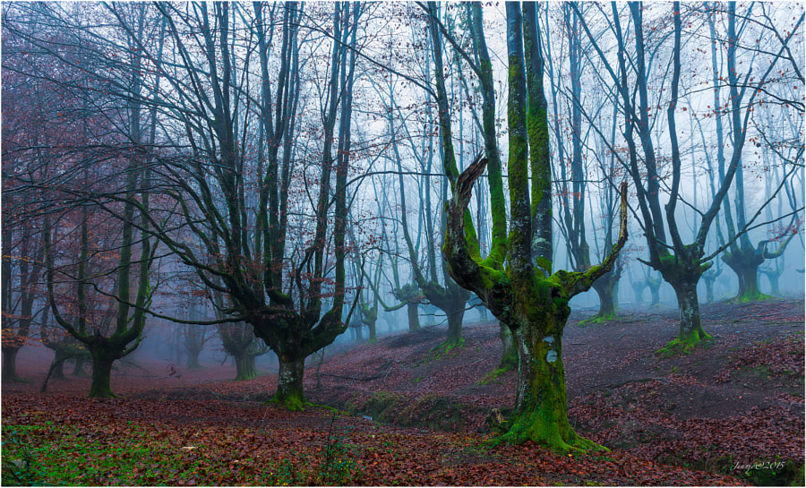 Trees by Juanjo Basurto on 500px