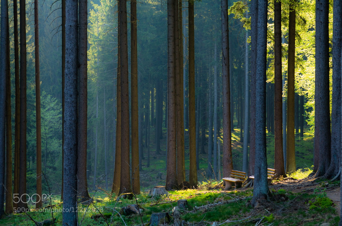 Photograph Silent Forest by Ingo Scholtes on 500px