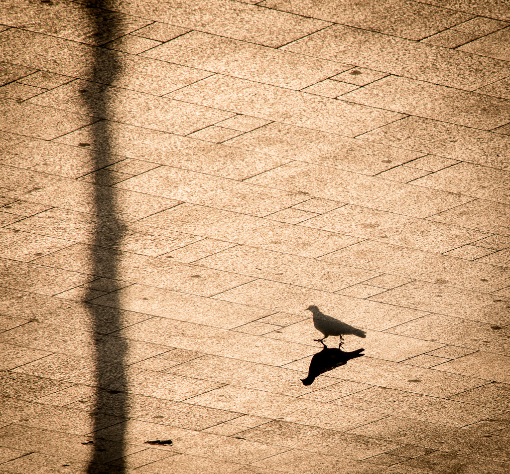 Photograph the pigeon  by Ahmed Alhammad on 500px