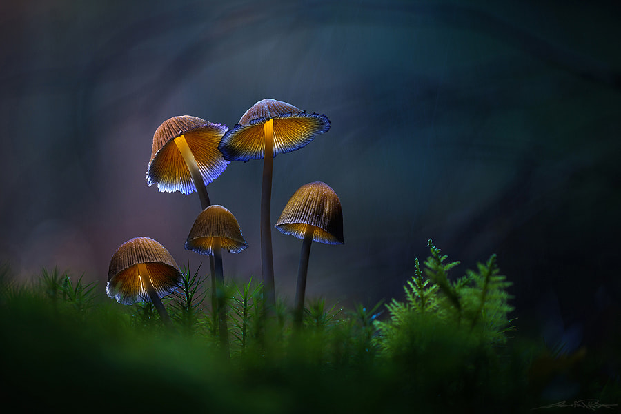 . : fantastic five : . by Martin Pfister on 500px.com