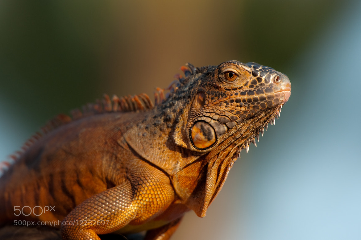 Photograph The Reptile by Feda Saimua on 500px