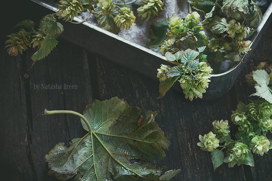 Smells of Autumn: Hop by Natasha Breen on 500px.com