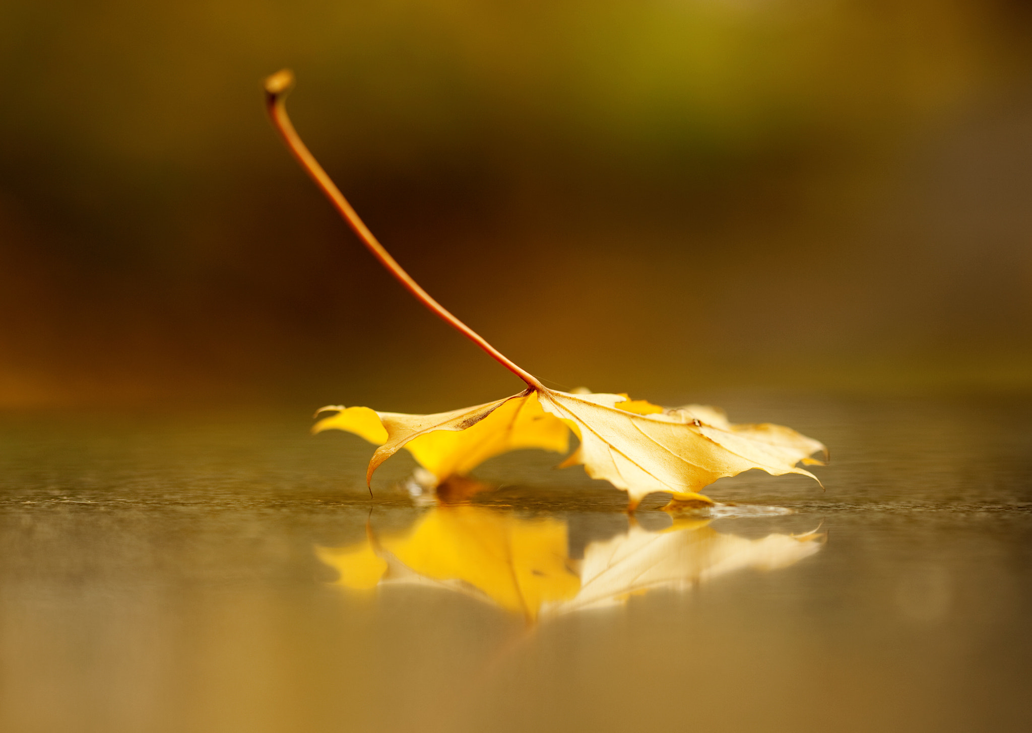 Photograph Fallen Down by Magdalena Jessica Krynicka on 500px
