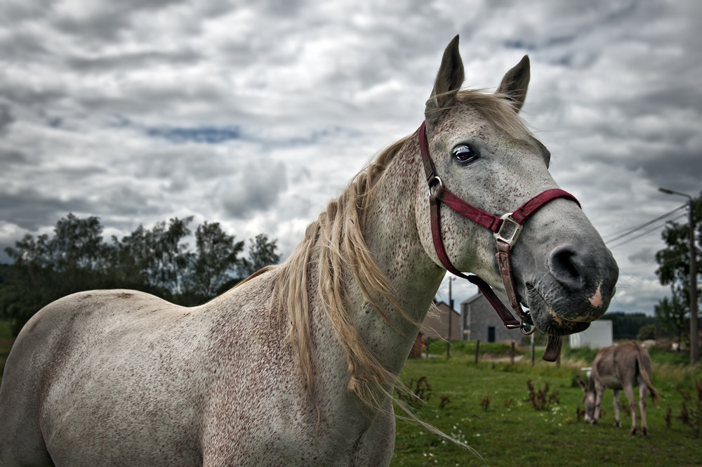 Photograph daisy the horse by piet flour on 500px