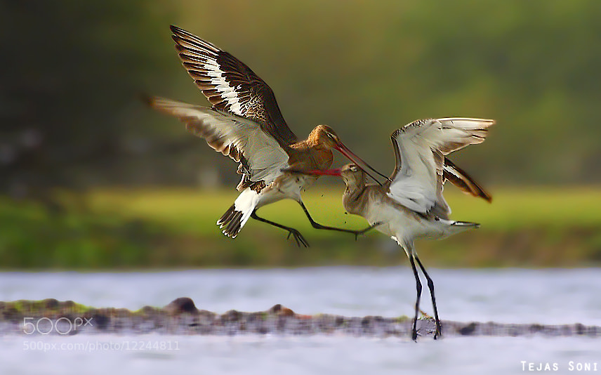 Photograph kung fu by Tejas Soni on 500px