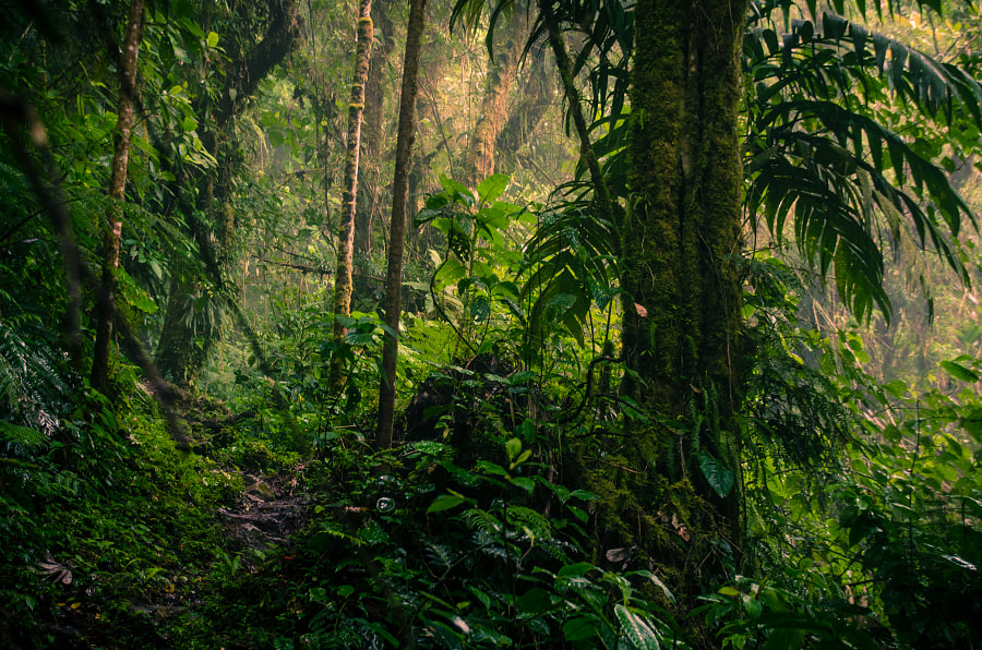Jungle / Boquete / Panama by TravelPixelz on 500px.com