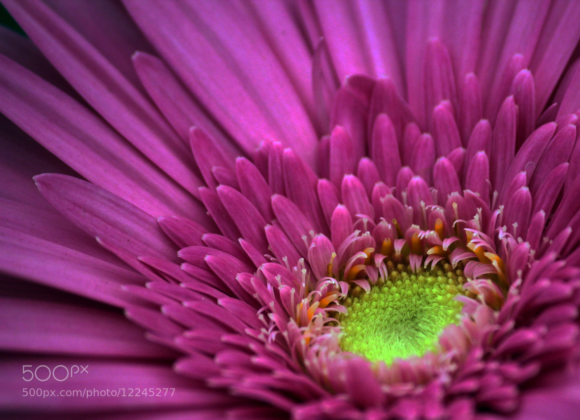 Photograph Flower - III by Smit Patel on 500px