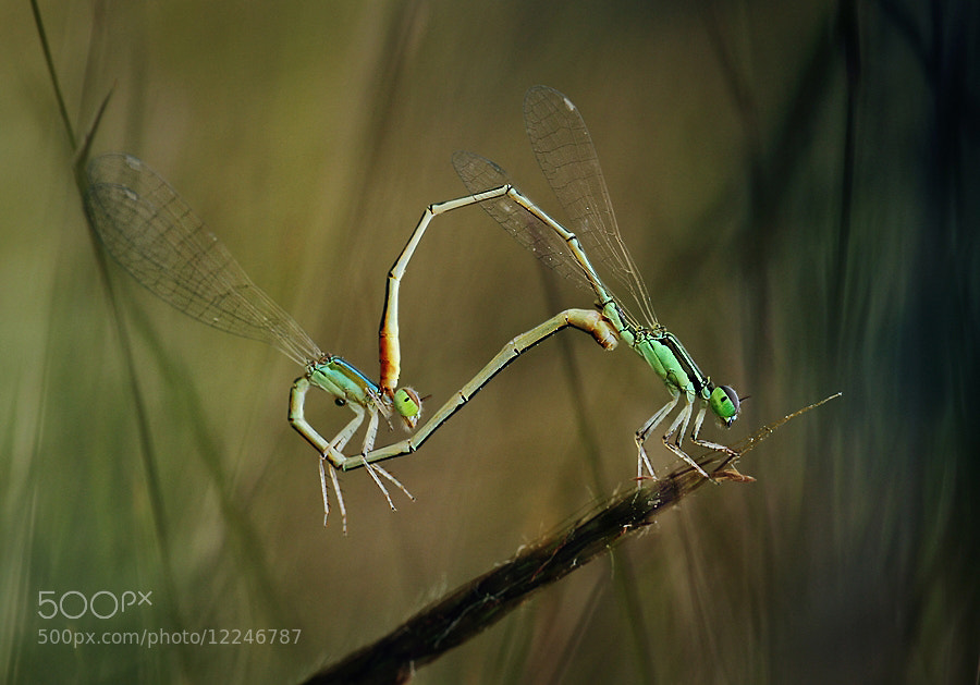 "Photograph "" surge of romance ""  by Angga Ra Putra on 500px"