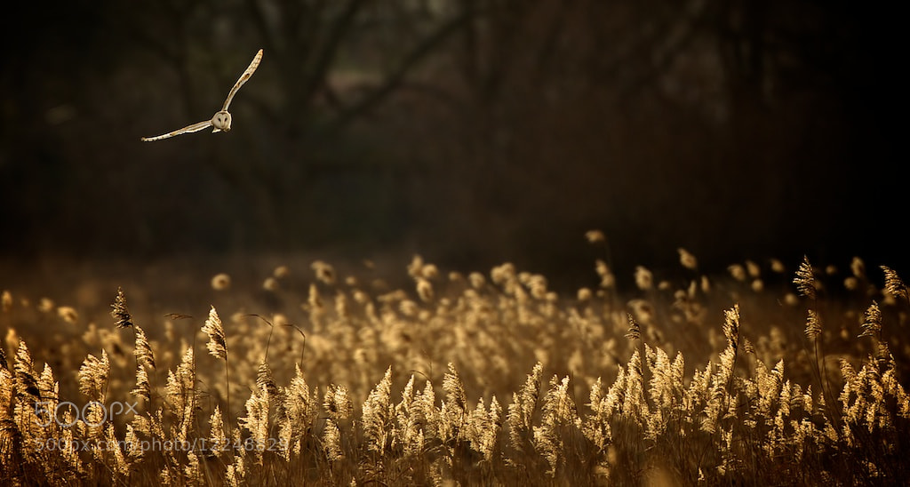 Photograph last light hunt by Mark Bridger on 500px
