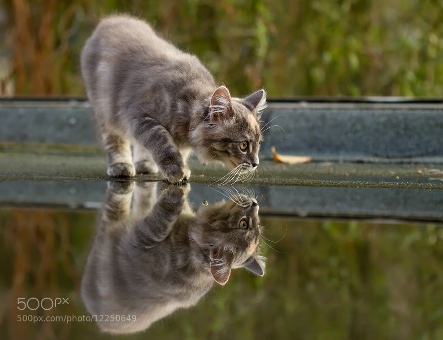 Photograph Cat on a Wet Tin Roof by Roeselien Raimond on 500px