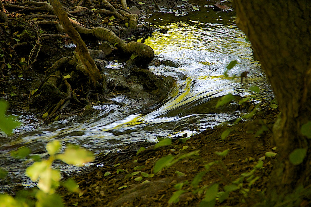 Photograph Rivulet by Javier Luces on 500px