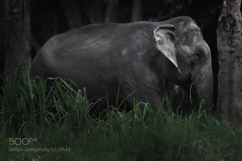 Photograph CHANG by Piya Palapunya on 500px