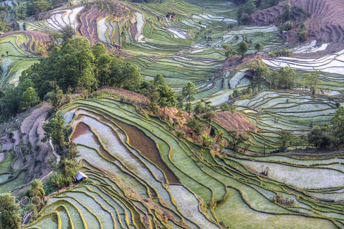 Photograph Ricefield Patterns #2 by Chaluntorn Preeyasombat on 500px