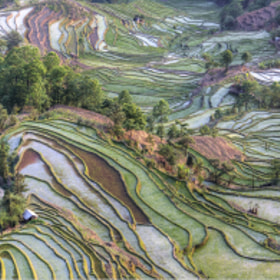 Ricefield Patterns #2 by Chaluntorn Preeyasombat (ting708)) on 500px.com