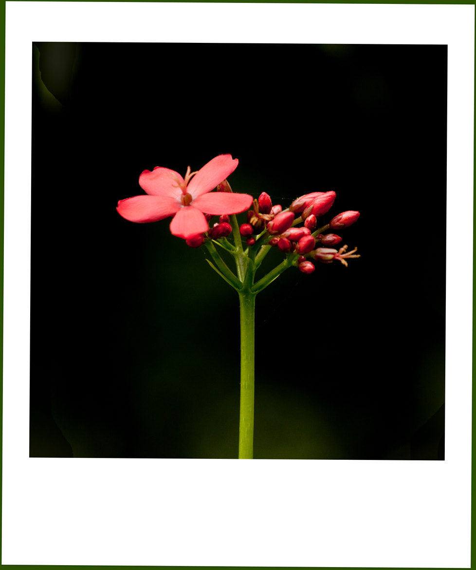 Photograph Red and green (3) by Samrat  Mukhopadhyay on 500px