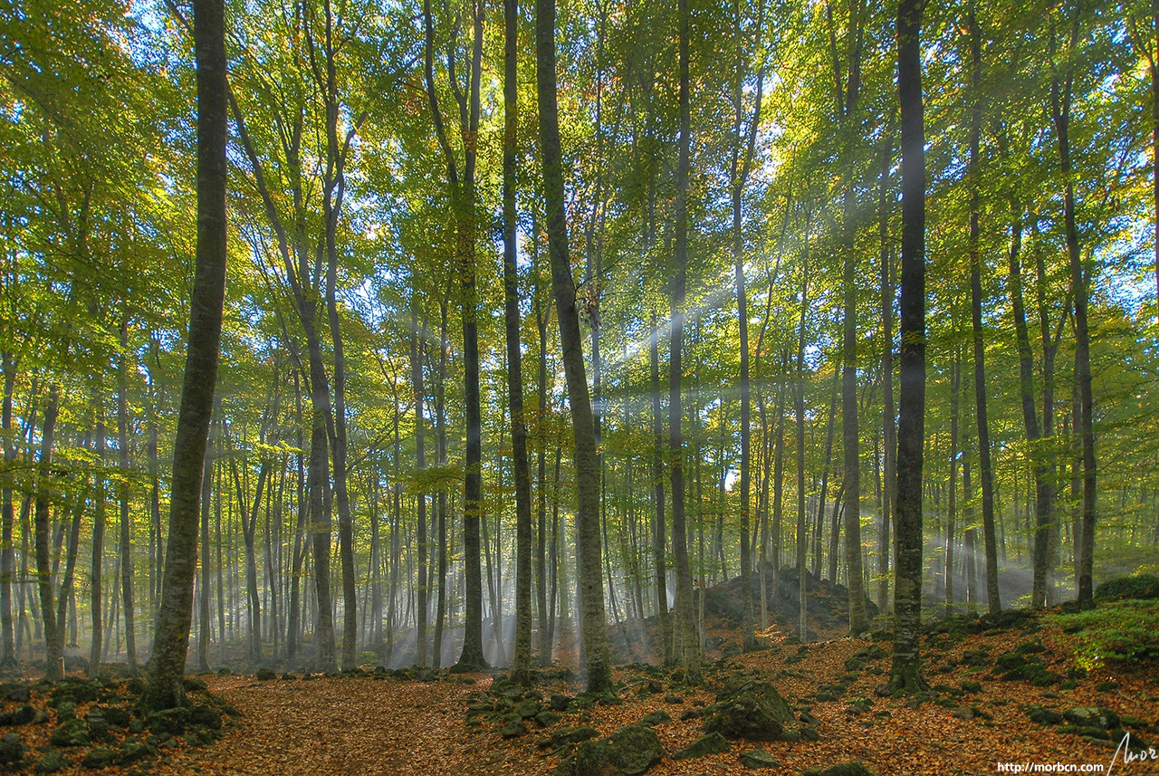 Photograph Fageda d'en Jordà by mor BCN on 500px