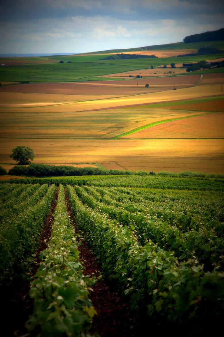 Photograph Champagne fields III by Johan Brouwer on 500px