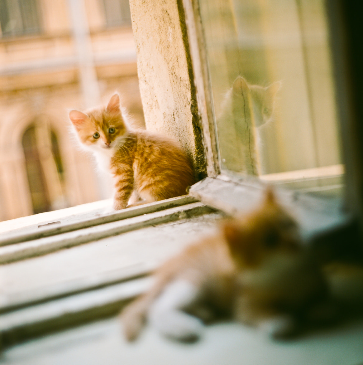 Photograph Cats and cats and cats by Stepan Vetoshnikov on 500px