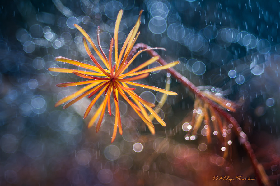 Autumn Rain by Shihya Kowatari on 500px.com