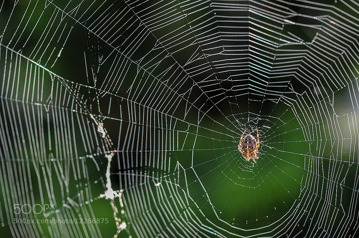 Photograph World Wide Web by Ton van de Laar on 500px