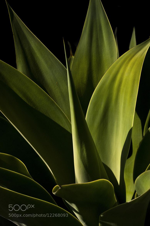Photograph Aloe by Jason Moskowitz on 500px