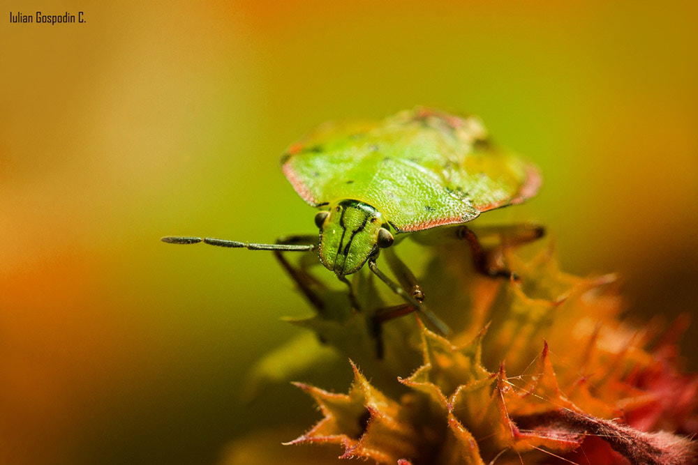 Photograph Little bugs by IULIAN GOSPODIN on 500px