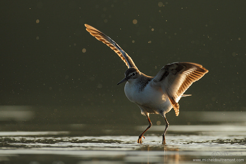 Photograph Dancing by Michel d'Oultremont on 500px