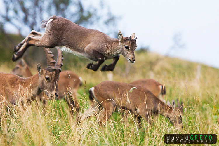 Photograph I believe I can fly ! by David Greyo on 500px