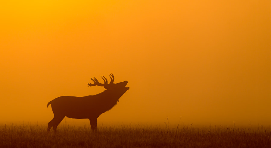 orange by Mark Bridger on 500px.com