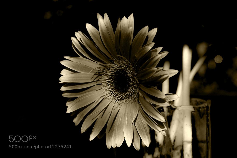 Photograph stillness... by Leila Raymond on 500px