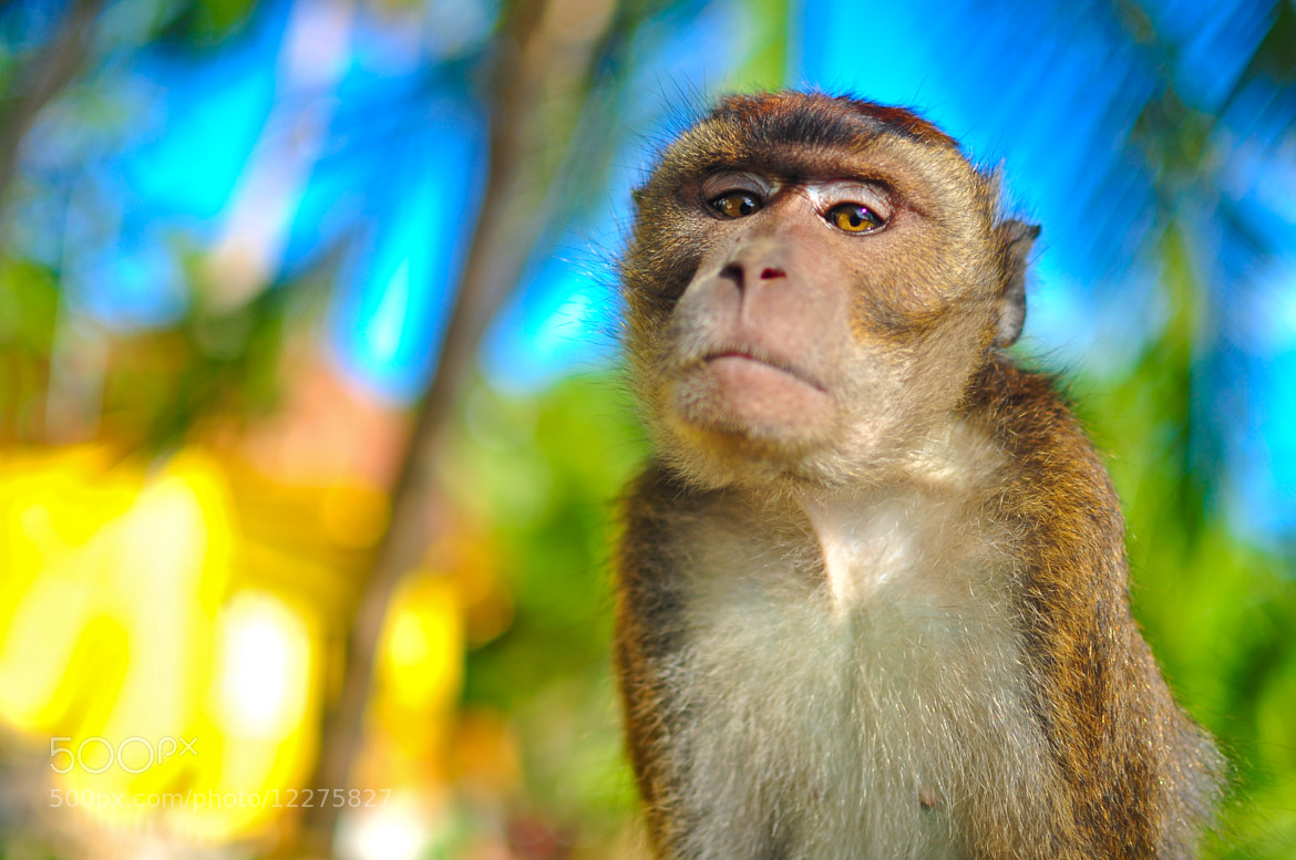 Photograph Not Impressed by Jeric Herrera on 500px