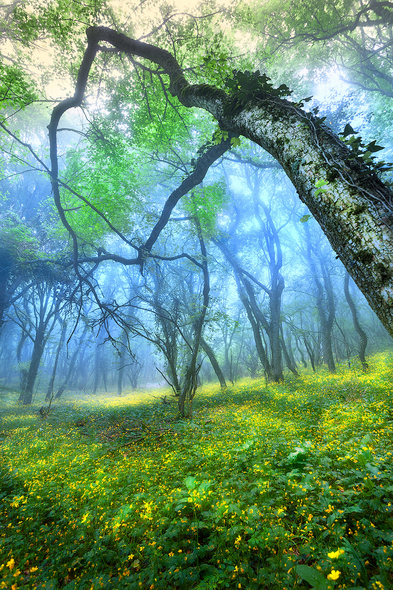 Photograph Magical Forest by Denis Belitsky on 500px