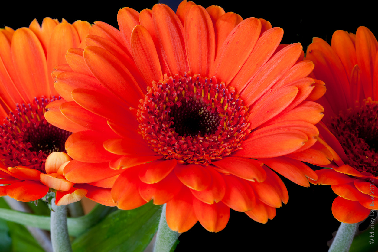 Photograph Orange by Murray Laidlaw on 500px