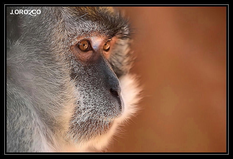 Photograph Mirada perdida. by jose orozco on 500px