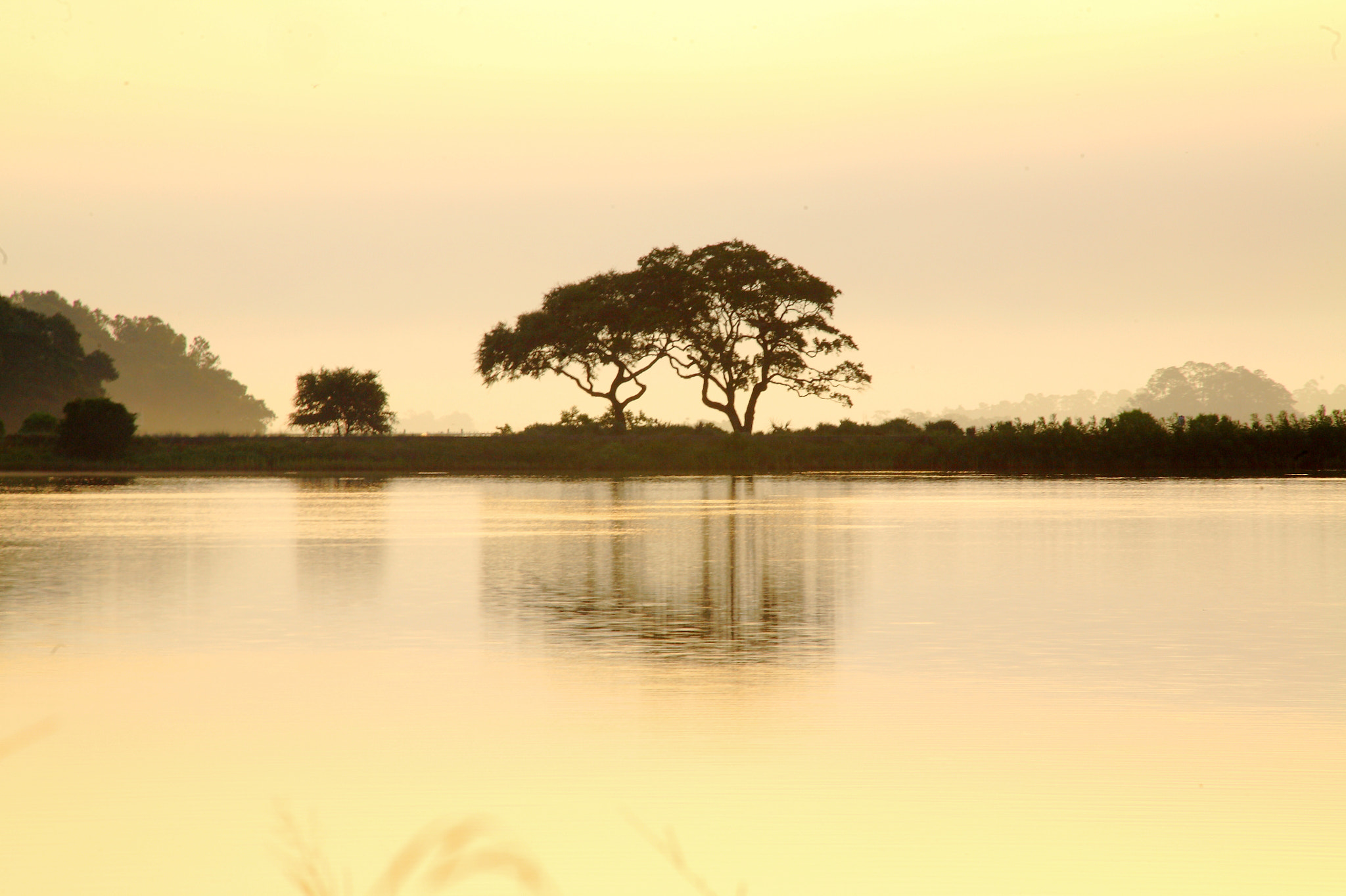 Photograph Live Oaks Silhouette by Ash Lindsey on 500px