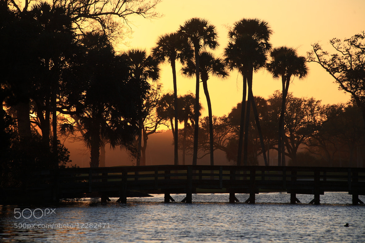 Photograph Palmettos by Ash Lindsey on 500px