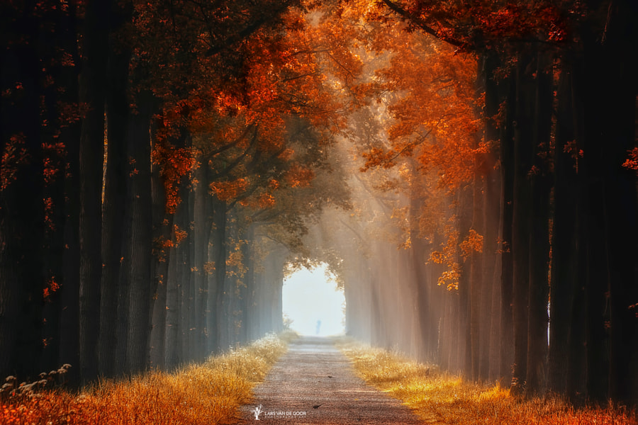 Dreaming of Autumn by Lars van de Goor on 500px.com