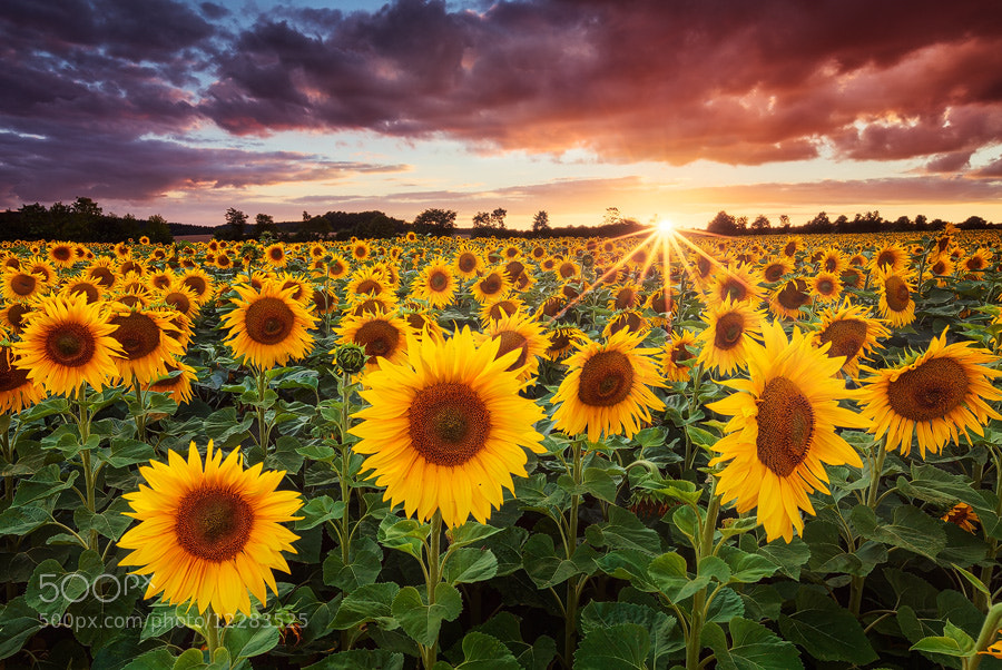 Photograph Sunshine by Michael  Breitung on 500px
