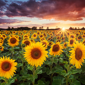 Sunshine by Michael  Breitung (mibreit)) on 500px.com