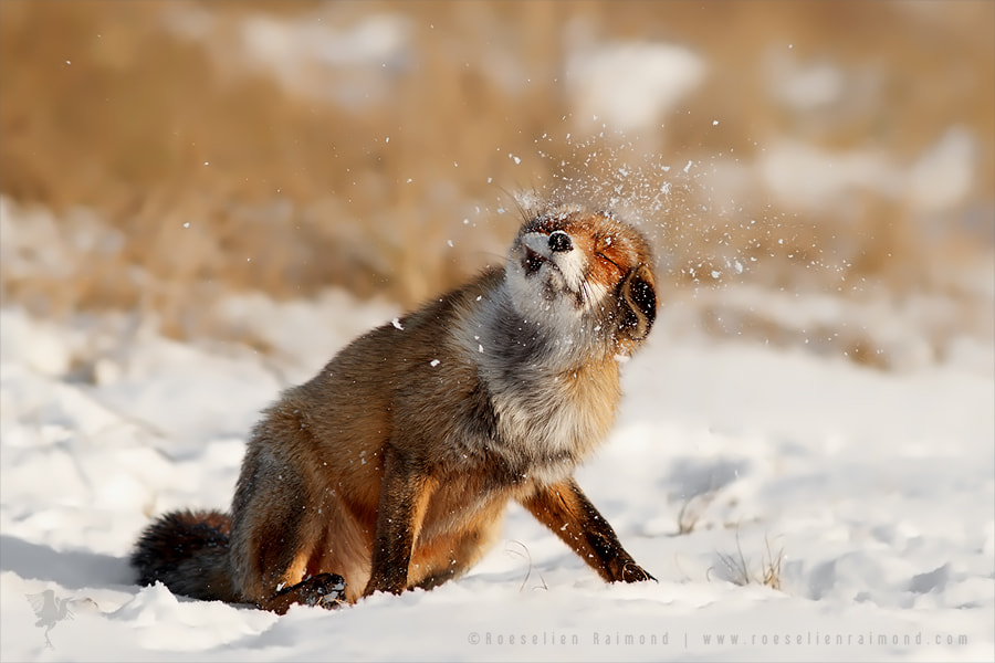 Slush Puppy by Roeselien Raimond on 500px.com