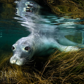 Seal in the Grass by Jason Bradley on 500px.com