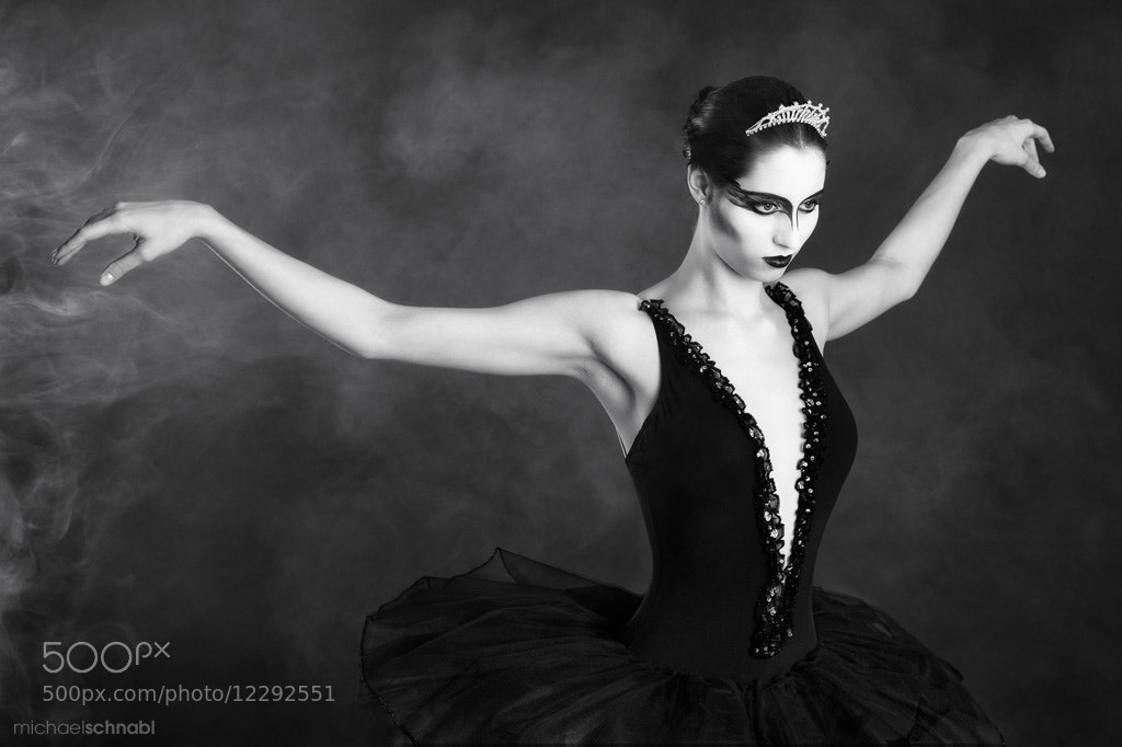 Photograph Black Swan by Michael Schnabl on 500px