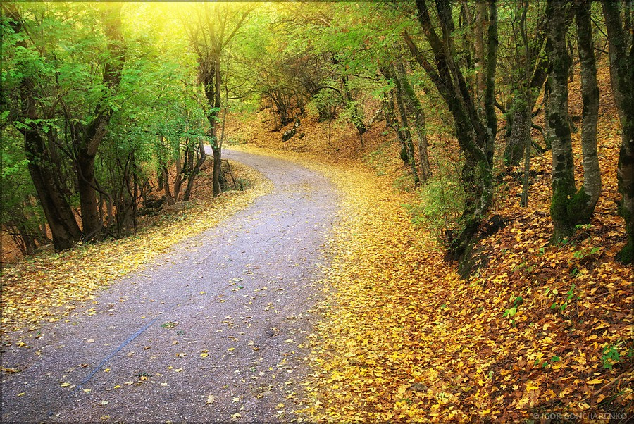 Photograph Road in autumn wood.  by Igor  Goncharenko on 500px